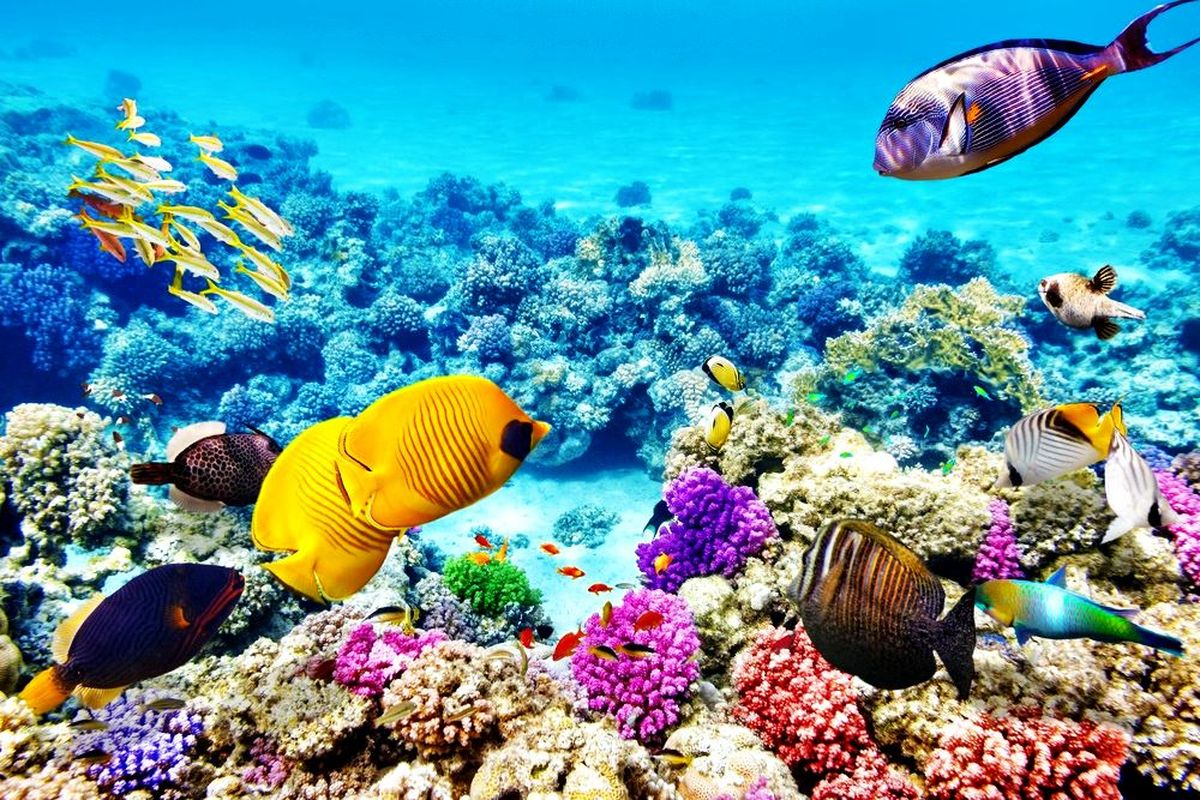 great-barrier-reef-2.jpg