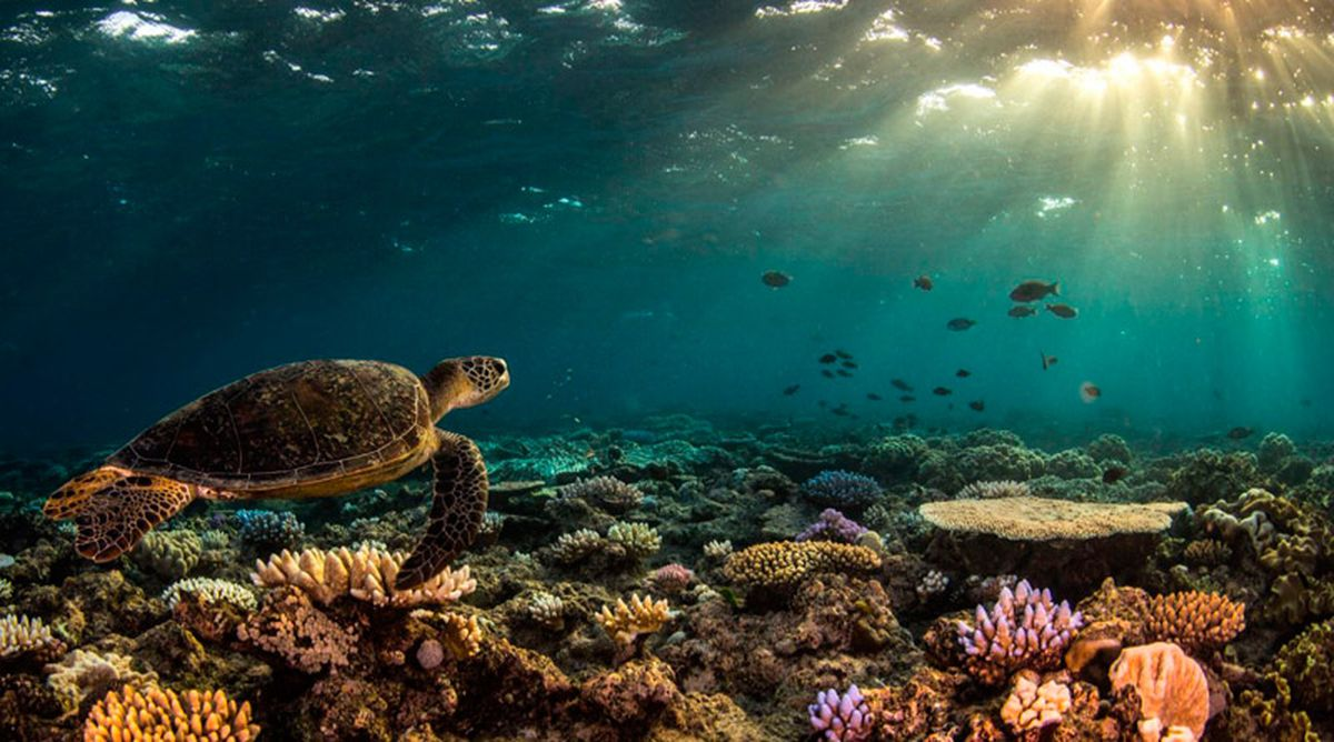 great-barrier-reef-3.jpg
